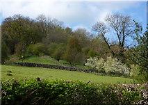 SK2563 : Hillside scene, Stanton Lees by Andrew Hill