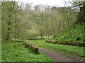 SK1963 : Woodland track to Bradford Dale by Andrew Hill