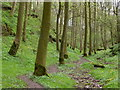 SK1962 : Footpath through Rusden Wood by Andrew Hill