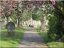 SK3736 : Spring in Nottingham Road Cemetery by Francis Dolman