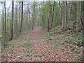 SE9162 : Beech  Wood  along  York  Bank by Martin Dawes