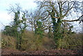 TQ2294 : Trees on the edge of Totteridge Fields by N Chadwick
