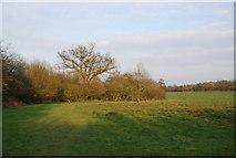 TQ2394 : Dollis Valley Greenwalk by Dollis Brook by N Chadwick