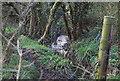 TQ2394 : Dollis Brook by N Chadwick