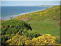 SX3952 : Coast near Sharrow Point by Philip Halling