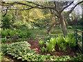 SJ7292 : The Prayer Garden by David Dixon