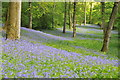 SO6329 : Bluebells in Yatton Wood by Philip Halling