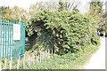 SU6067 : New hedge by the pillbox by Bill Nicholls