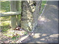 SJ5172 : Cut Mark: Spicers Well Cottage, Manley by VBForever