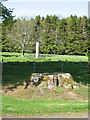 NJ3459 : Tree Stump by the Cross by Anne Burgess