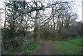 TQ2596 : LOOP crossing King George's Field by N Chadwick