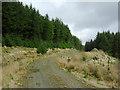 SN7954 : Forestry road on Esgair Gors, Ceredigion by Roger  Kidd