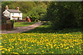 SO6419 : Dandelions and cottage, Bailey Lane End by Philip Halling