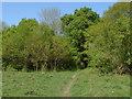 SU8949 : Footpath near Ash by Alan Hunt