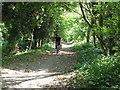 TQ3352 : Cycling up Green Lane by Stephen Craven