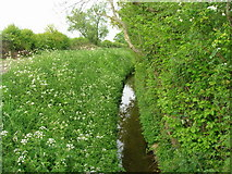 SE6548 : Drainage ditch beside Langwith Stray by JThomas