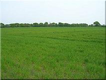 SE6648 : Farmland near Langwith Lodge by JThomas
