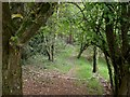 SZ0196 : Dunyeats, woodland path by Mike Faherty