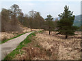 NM8263 : Track into Ariundle Nature Reserve by Trevor Littlewood