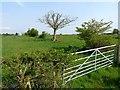 NY4274 : Field near Hilltop Farm by Oliver Dixon