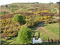 NZ5618 : Path leading to the top of Eston Moor by Peter S