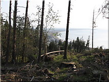 J3630 : A clearing in Donard Wood with Dundrum Bay in the background by Eric Jones