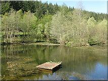 NT2840 : Pond on the Glentress Burn by M J Richardson