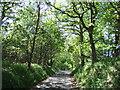 TF8232 : Lane in Coxford Wood by Richard Humphrey