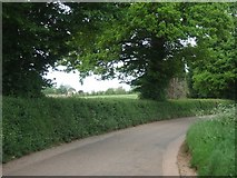 SX9890 : Hedge by Oil Mill Lane by David Smith