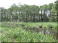 SU4830 : River Improvements at Winnall Moors by Caroline Maynard