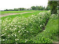 TM1298 : Cow parsley and ditch beside Silfield Road, Ashwellthorpe by Evelyn Simak