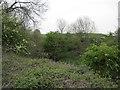 SE9261 : Chalk  Pit  (Disused) by Martin Dawes