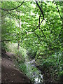 TQ3766 : The Beck, High Broom Wood (14) by Mike Quinn
