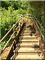 SX9165 : Steps above Teignmouth Road, Torquay by Derek Harper