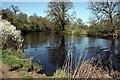 SJ4161 : Riverside Walk near Eccleston by Jeff Buck