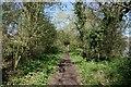 SJ4160 : Riverside walk on the River Dee by Jeff Buck