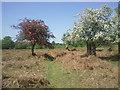 TQ1973 : Richmond Park near Bog Lodge by Marathon