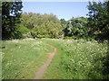 TQ2374 : Path on Putney Heath by Marathon