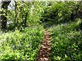 SW8762 : Nature Trail at the edge of Porth Reservoir by Tony Atkin