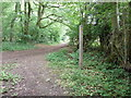 SU9922 : Footpath on the edge of Brinkshole Heath by Dave Spicer