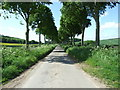 ST9909 : Avenue of Trees, near Moor Crichel by Lorraine and Keith Bowdler