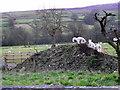 SE0498 : Lambs, Fremington by Maigheach-gheal