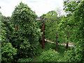 TQ1876 : Xstrata Tree Walk, Kew Gardens by Christine Matthews