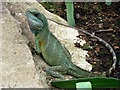TQ1877 : Chinese Water Dragon, Princess of Wales conservatory, Kew Gardens by Christine Matthews