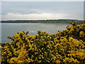 SH4987 : Gorse bushes at Lligwy Bay, Anglesey by Peter Barr