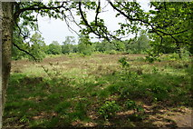 TQ2372 : Putney Heath by Bill Boaden