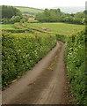 ST2911 : Lane to Combe St Nicholas by Derek Harper