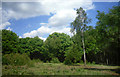 TQ1793 : Silver Birch on Stanmore Common by Des Blenkinsopp