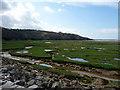 SH5837 : Marshland looking towards Trwynypenrhyn, Gwynedd by Christine Matthews