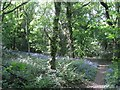 SP1966 : Bluebells in woodland, Yarningale Common by Robin Stott
